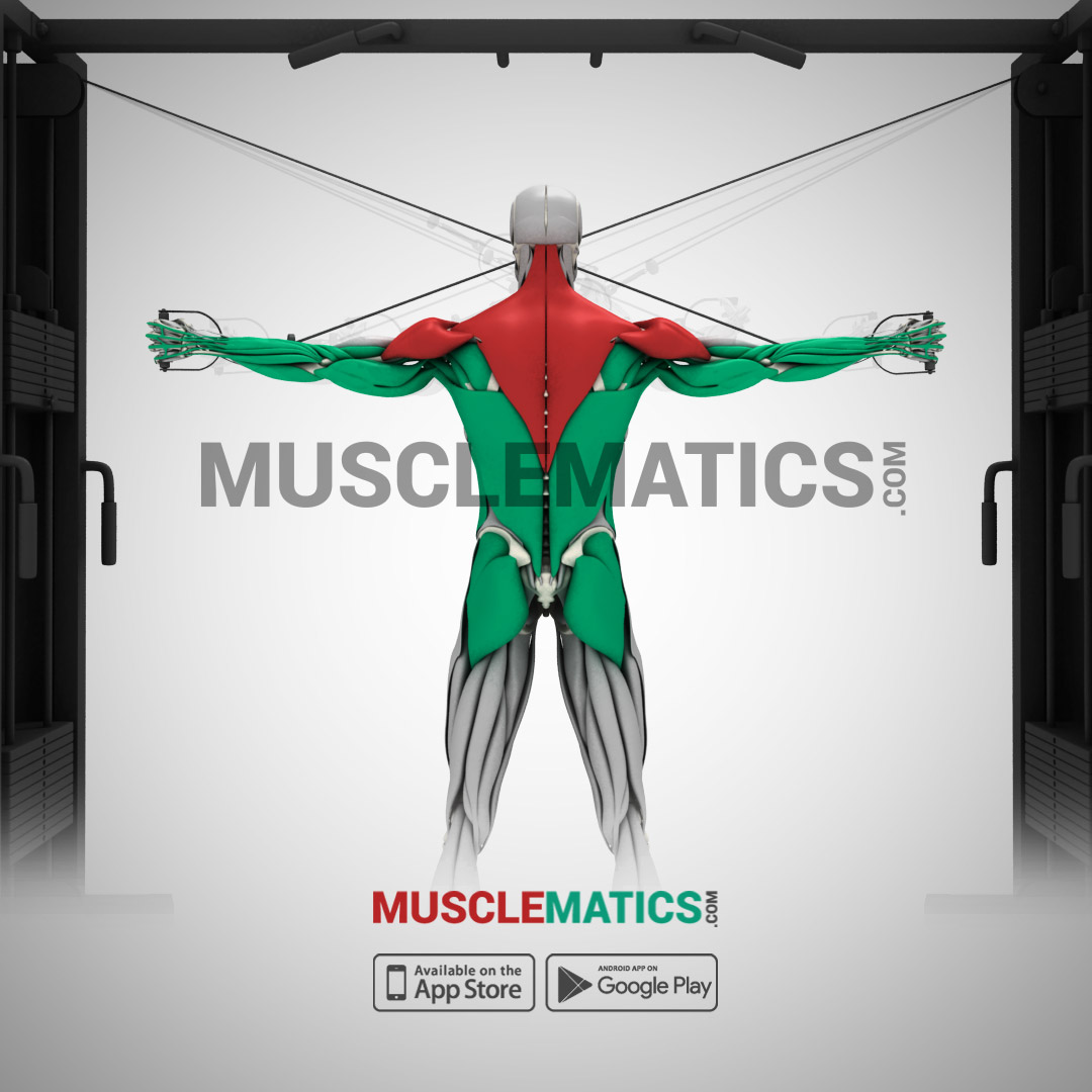 Musclematics Follow The Movement Illustration Graphics Contest Full Body Muscle Diagram For Choose Exercises From Our Unique Database Containing Isolated Movements To Activation Science Has Proven That Variety Promotes