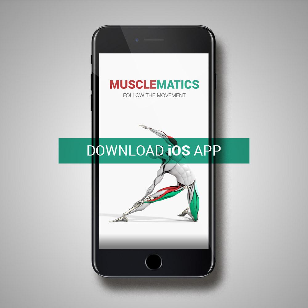 MuscleMatics – Follow the Movement